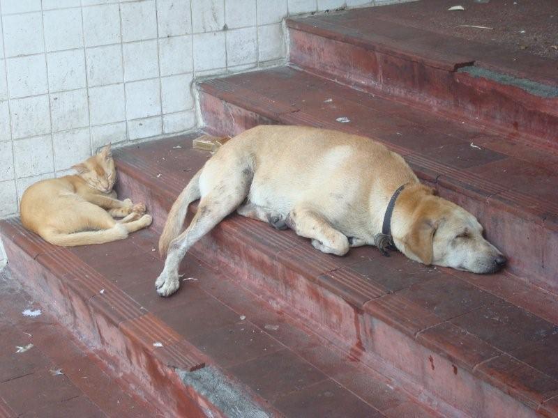tired animals – Travelling Kiwi  tired animals �...