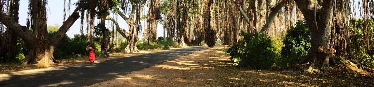 Travelling Kiwi